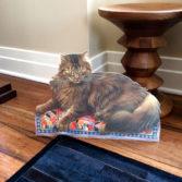 John_Savitski_Lesley-the-Cat