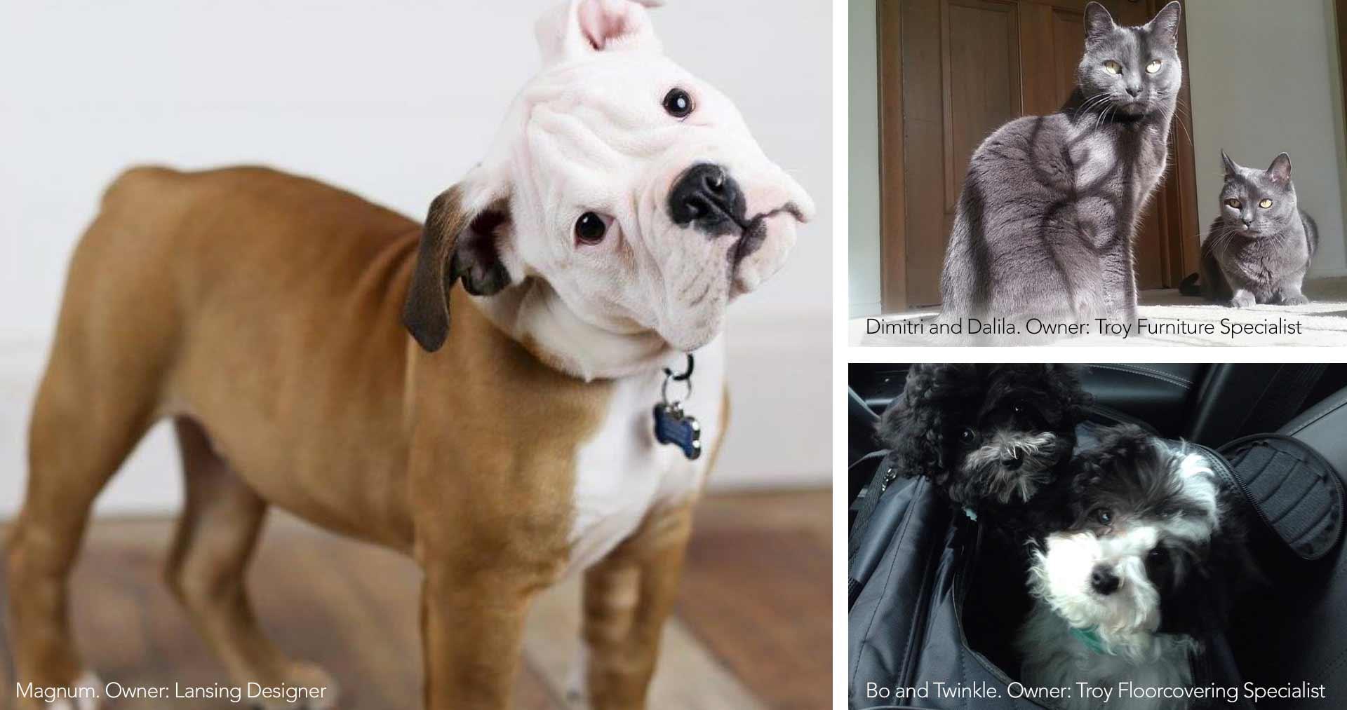 NBS-Pets-Campaign_Page_2-2-1.DL17