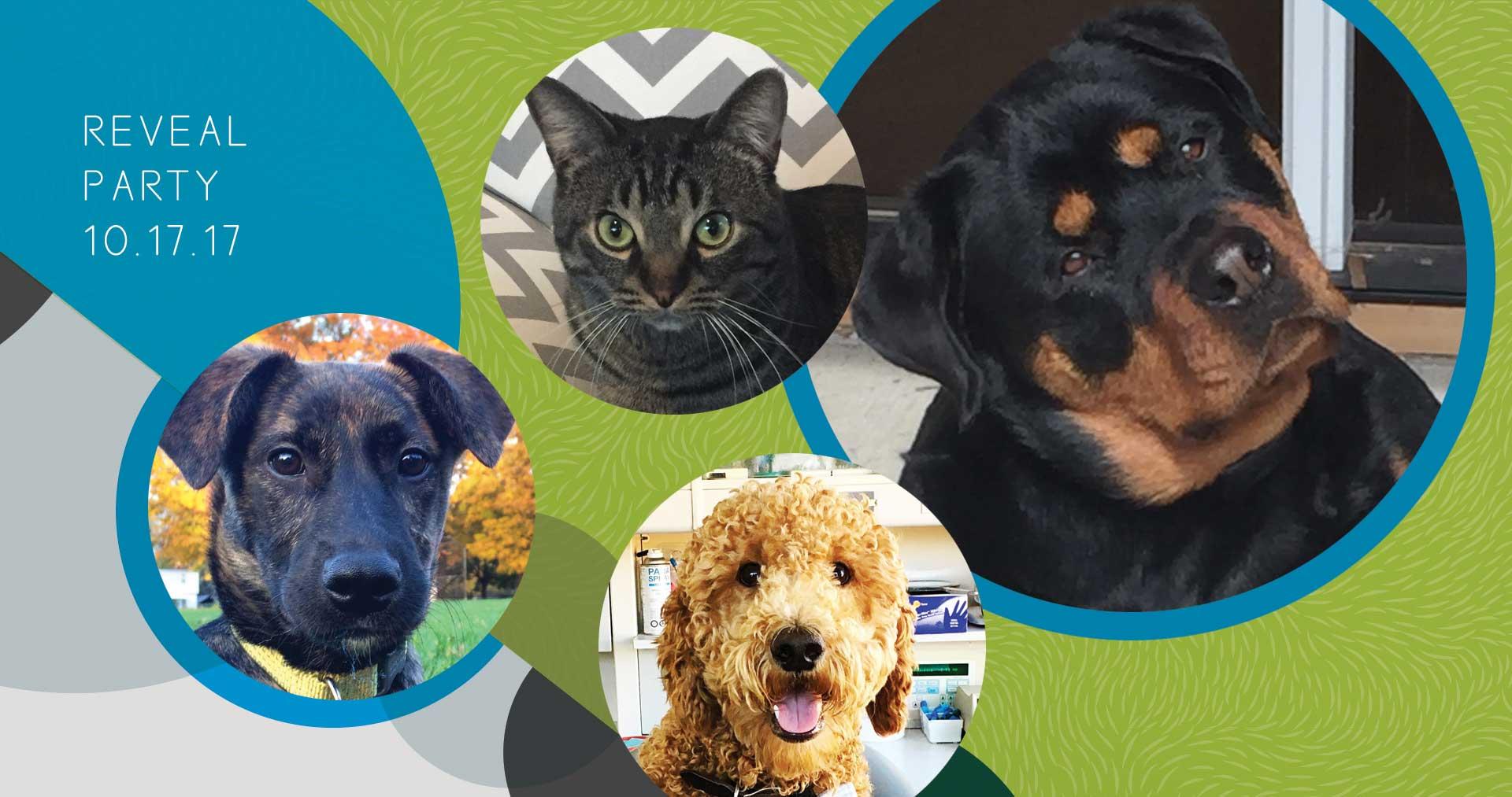 NBS-Pets-Fur-Reveal-1-DL-1017-2018