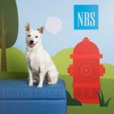 NBS_Finalist_NBSCalendar_19_4