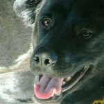 NBS Pet Story
