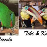 Piccolo-Tiki-Kona_Plagens_Jennifer_1080