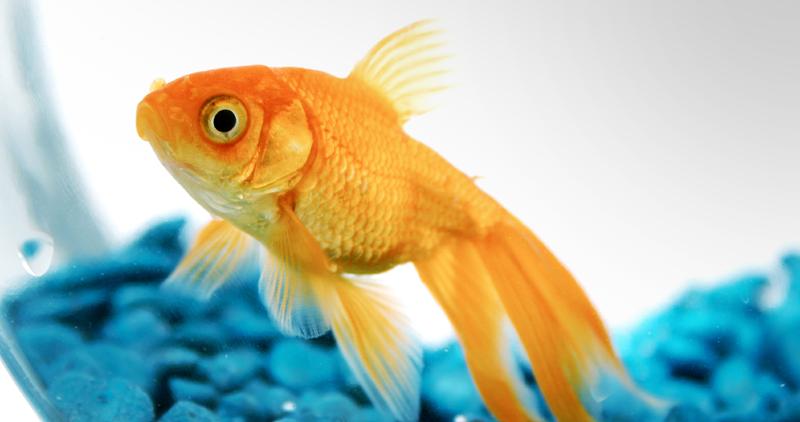 fishthinking